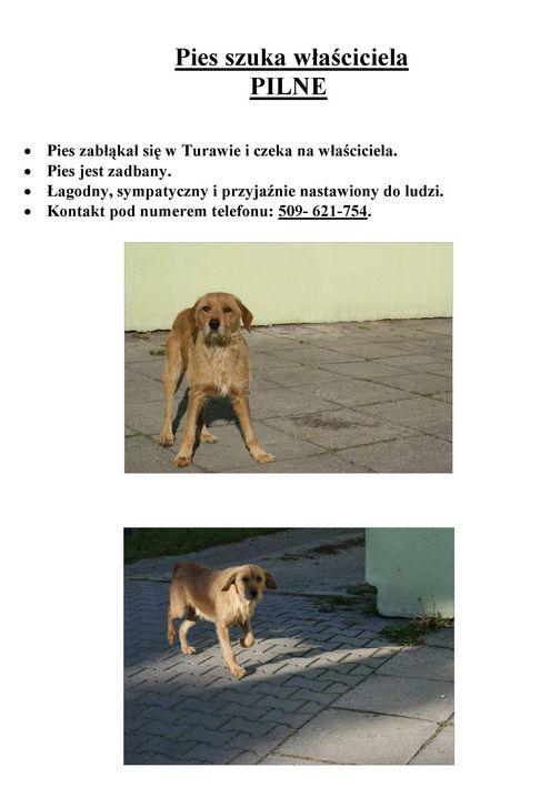 Znaleziono psa -  Turawa-page-001.jpeg