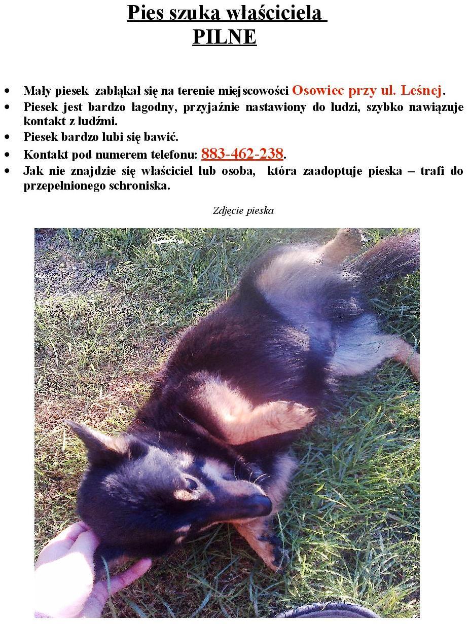 Znaleziono psa - OSOWIEC 24.06.15-page-001.jpeg