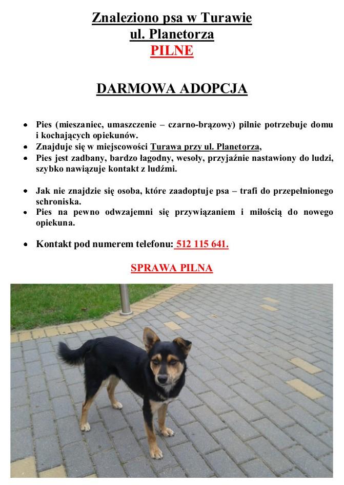 Znaleziono psa - TURAWA.jpeg