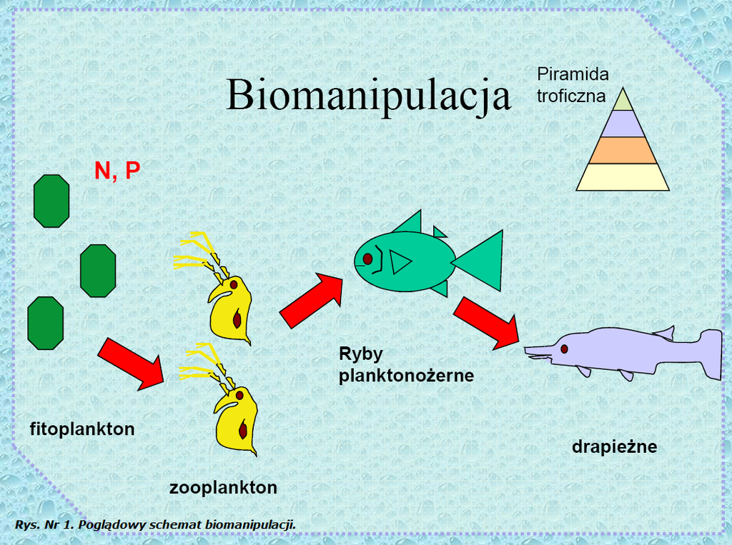 biomanipulacja.png
