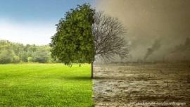 czyste-powietrze-smog-ekologia-srodowisko autor.jpeg